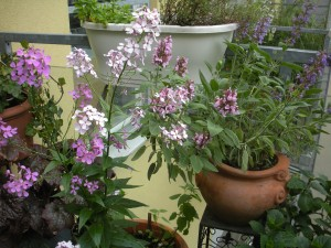 8 tipps pflanzen f r den sonnigen balkon hofdame. Black Bedroom Furniture Sets. Home Design Ideas