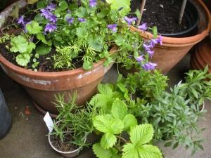 Mehrere Pflanzen in einem Topf