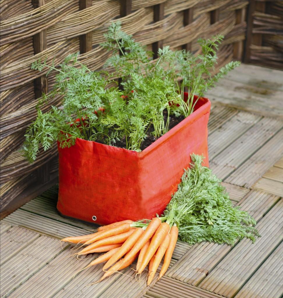 Pflanztasche für Karotten
