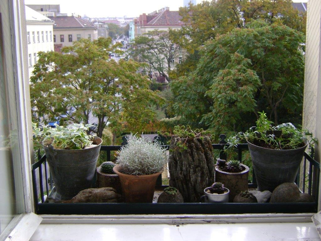 FenstergartenimSommer